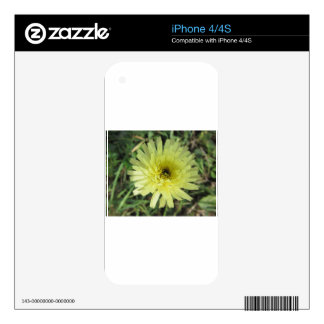Meadow salsify flower decal for the iPhone 4S