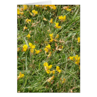 Meadow Vetchling Card