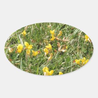 Meadow Vetchling Oval Sticker