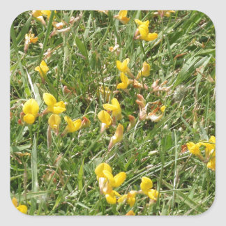 Meadow Vetchling Square Sticker
