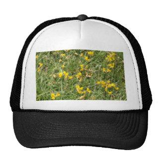 Meadow Vetchling Trucker Hat