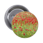 Meadow With Beautiful Bright Red Poppy Flowers Buttons