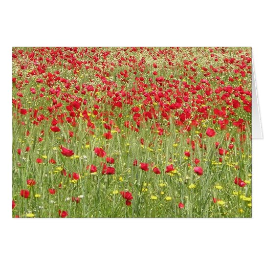 Meadow With Beautiful Bright Red Poppy Flowers Card