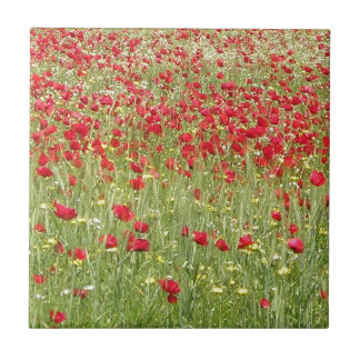 Meadow With Beautiful Bright Red Poppy Flowers Ceramic Tile