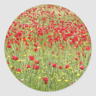 Meadow With Beautiful Bright Red Poppy Flowers Classic Round Sticker