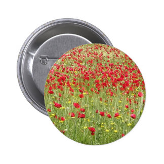 Meadow With Beautiful Bright Red Poppy Flowers Pinback Button