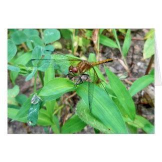 Meadowhawk (Sympetrum) Golden Dragonfly Card