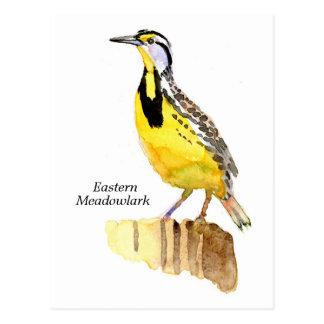 Meadowlark del este tarjetas postales
