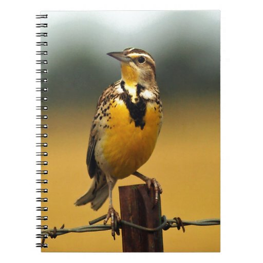 Meadowlark occidental libros de apuntes con espiral