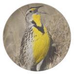 Meadowlark occidental (neglecta de Strunella) aden Platos De Comidas