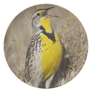 Meadowlark occidental (neglecta de Strunella) aden Platos Para Fiestas
