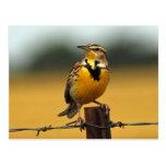 Meadowlark occidental postales