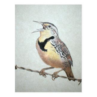 Meadowlark Postcard