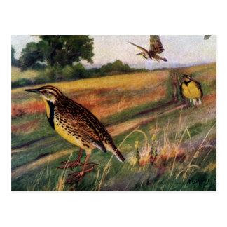 Meadowlarks in a Grassy Field Postcard