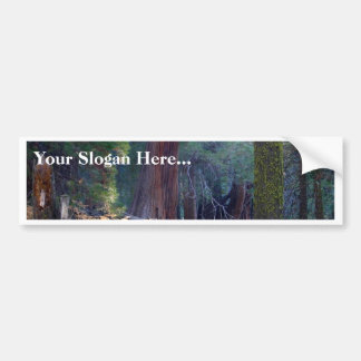 Meadows Lightrays Beams Forests Trees Bumper Sticker