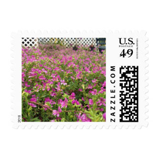 Meadows of pink stamps