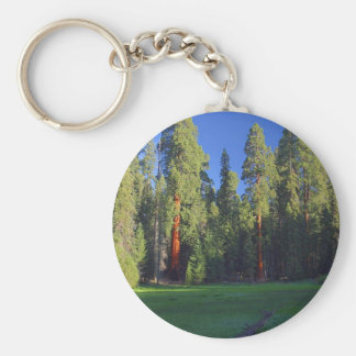 Meadows Sequoia Keychains