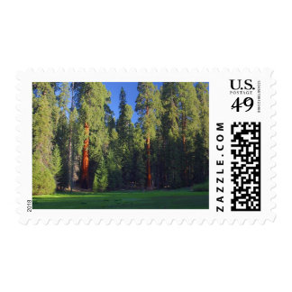 Meadows Sequoia Postage