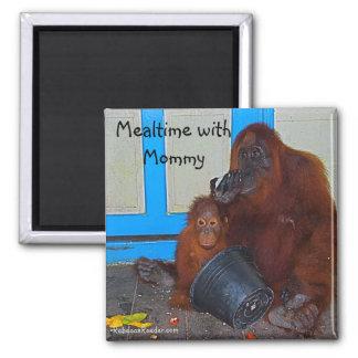 Mealtime con el orangután de la mamá imán de nevera