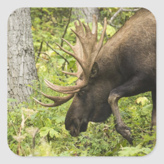 Meandering Moose Square Sticker