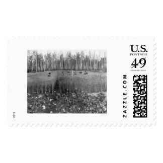 Measuring Grain Fairbanks 1916 Postage Stamps