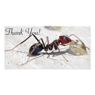 Meat Eater Ant Feeding On Honey Card