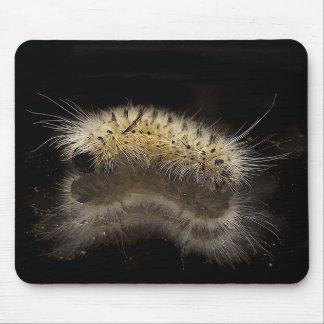 Mechón Caterpillar de la nuez dura Alfombrilla De Raton