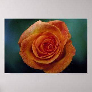 Medalla de oro hermosa 'Aroyqueli color de rosa gr Posters