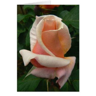 Medallion Rose Cards