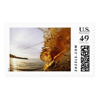 MeddockPhoto_Stamp_Action Stamp