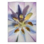 mediados de tulipán púrpura tarjeta