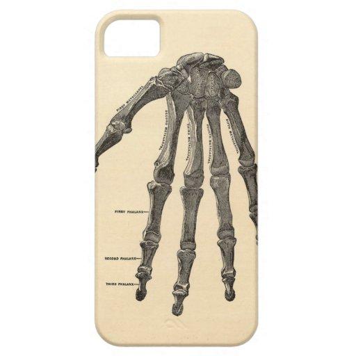 Medical Anatomy Hand Bones iPhone Case iPhone 5 Case