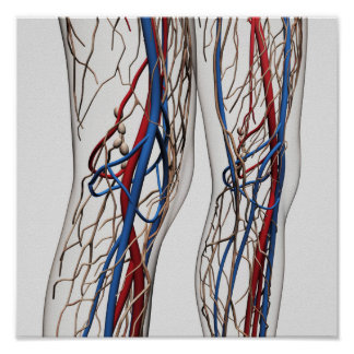 Medical Illustration Of Arteries 1 Posters