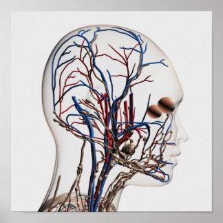 Medical Illustration Of Head Arteries 1 Print