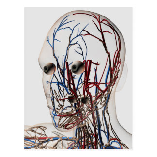 Medical Illustration Of Head Arteries 2 Postcard