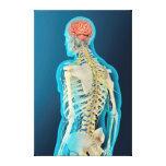 Medical Illustration Of Human Brain & Brain Stem Canvas Print