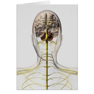 Medical Illustration Of Human Nervous System 2 Card