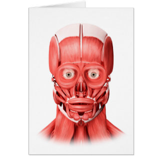 Medical Illustration Of Male Facial Muscles 1 Card