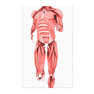 Medical Illustration Of Male Muscles Running 1 Canvas Print