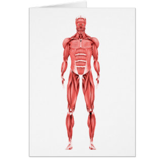Medical Illustration Of Male Muscular System 2 Card