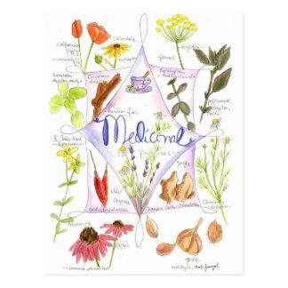 Medicinal Herb Echinacea Garlic Poppy Postcards