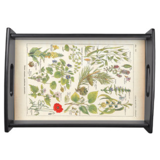 Medicinal Plants and Herbs in French Serving Trays
