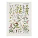 Medicinal Plants Digestive Stimulants in French Posters