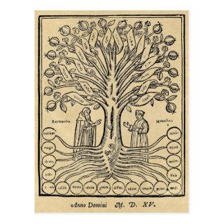 Medieval Tree of Science Postcard