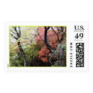Medinas Fall Postage Stamp
