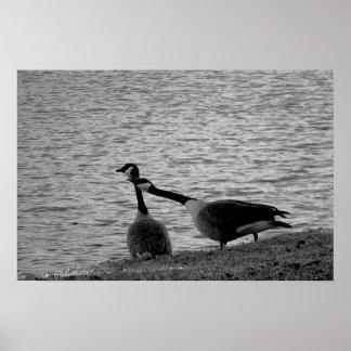 Medio del poster de los pájaros B W del amor