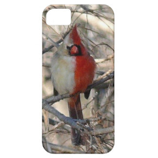 Medio varón del pájaro cardinal salvaje, a medias  iPhone 5 protectores