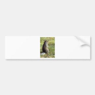Meditaciones de la ardilla etiqueta de parachoque