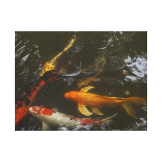Meditation on Koi Stretched Canvas Print