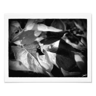 Meditation (or Buddha Bug) Photo Print